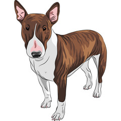 vector smiling cartoon Bull Terrier Dog breed