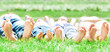 canvas print picture - Family feet on grass
