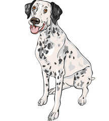 vector sketch dog Dalmatian breed smiles