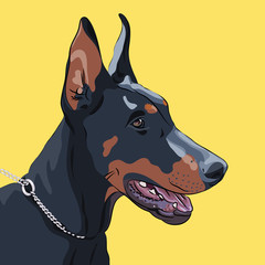 vector closeup serious dog Doberman Pinscher breed