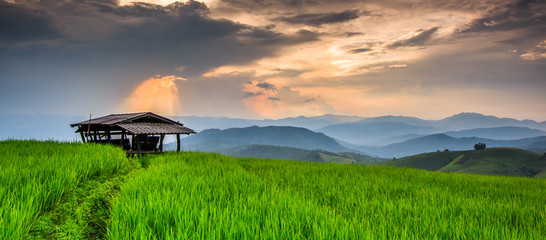 Paddy in the sunset, Chiangmai province of Thailand
