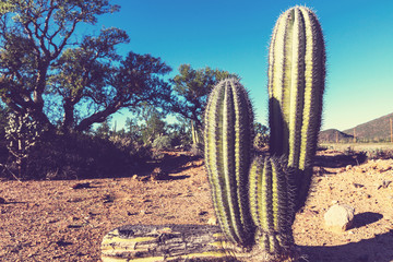 Cactus in Mexico