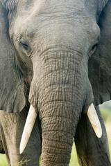 Elefanten CloseUp