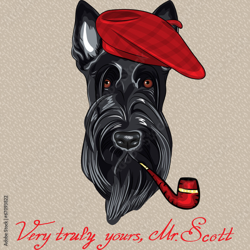 vector funny cartoon hipster dog Scottish Terrier - 67093822