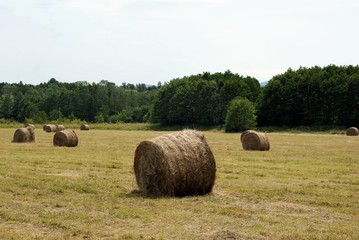 drying hay on meadow