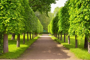 Alley in summer time in Peterhof, St.Petersburg, Russia