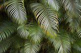 Dark Tropical Jungle Palm Frond Background - 67094616