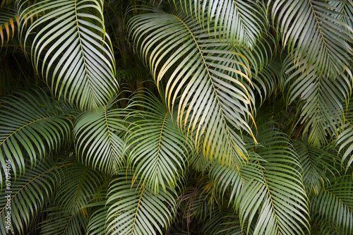 Keuken foto achterwand Palm boom Dark Tropical Jungle Palm Frond Background