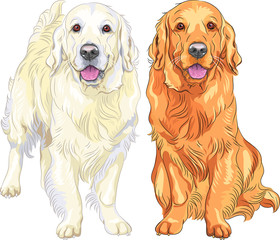 vector sketch two dog breed Golden Retriever