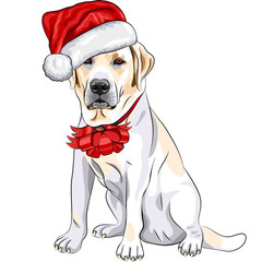 vector dog Labrador in the hat of Santa Claus with Christmas bow