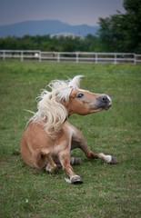 cavallo faccia buffa