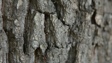 ants on the bark