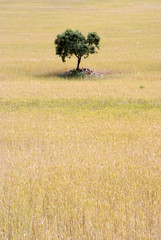Tree and planting wheat.
