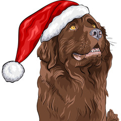 vector dog Newfoundland in a Christmas hat of Santa Claus