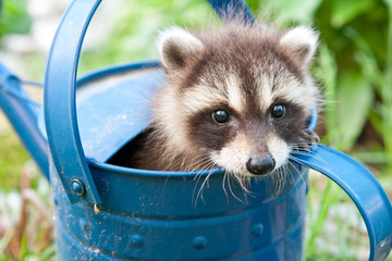 Hiding in a watering can