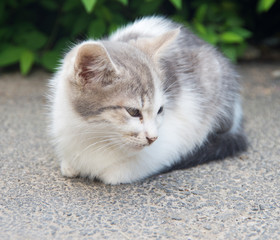 small homeless kitten