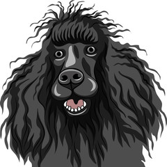 vector color sketch of the black smiling dog Poodle breed