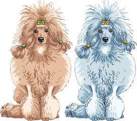 vector dog  Poodle breed sitting