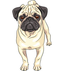 vector sketch cute dog pug breed