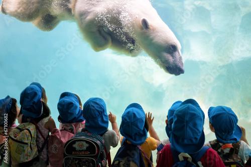 Leinwanddruck Bild Eisbär taucht ab