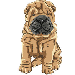 vector cute red Shar Pei dog puppy smiles