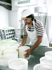 Cheese making - turning the fresh cheeses.