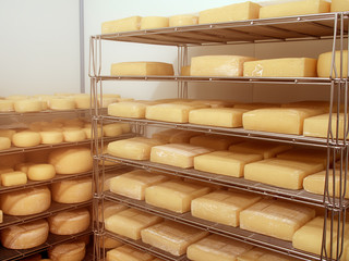 Artisan cheese in cold store, maturing.