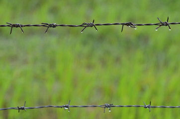 Barb wire with rice field background