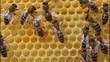 Obrazy na płótnie, fototapety, zdjęcia, fotoobrazy drukowane : Bees build honeycombs