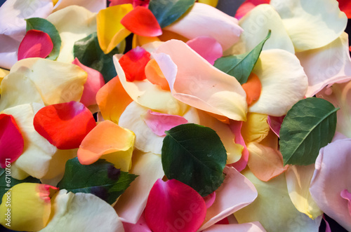 canvas print picture rose petals