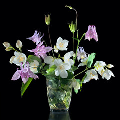 Bouquet of jasmine flowers and aquilegia isolated on black