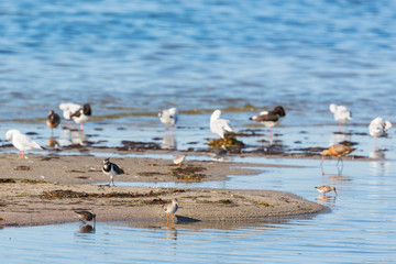Shorebirds on a beach