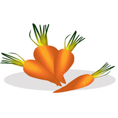 Carrot vector illustration.