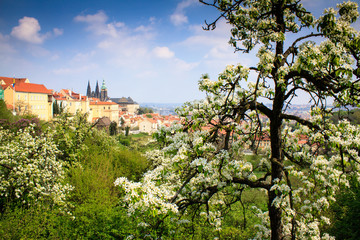 Spring Prague Castle Photo - The Cathedral
