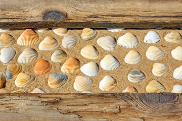 Weathered Wooden Boards and seashells