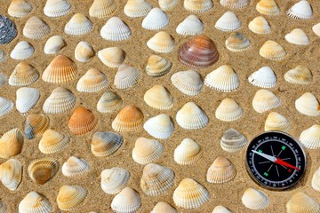 Seashells and Compass