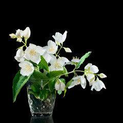 Bunch of jasmine flowers on a black background