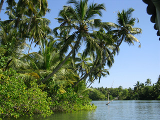 Coconut palms along the Kerala coast