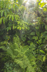 green tropical background rainforest