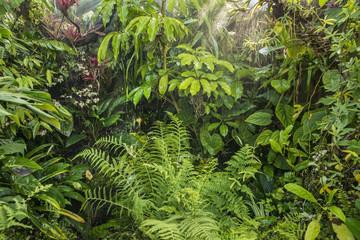 green tropical background rainforest