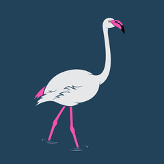 Vector image of an flamingo
