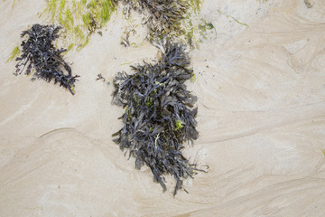 green seaweed on a beach