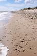 muscheln und steine am sandstrand