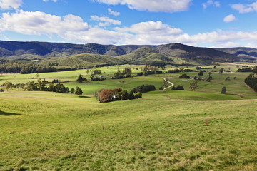 Tas Valley Pasture