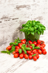 fresh basil plant and cherry tomatoes