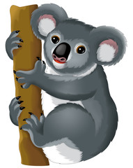 Cartoon animal - koala bear - illustration for children