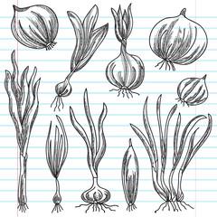 set of onions