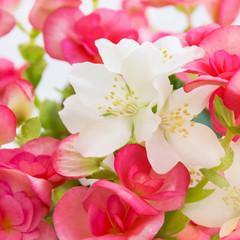 Blumen - Begonien