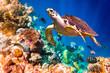 Hawksbill Turtle - Eretmochelys imbricata - 67120604