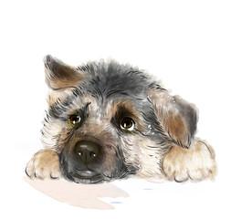 portrait of the german shepherd puppy